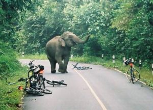 Elephant squashes bicycle