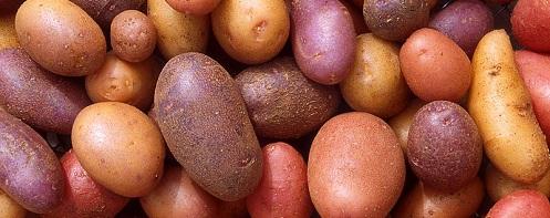Assorted potato varieties