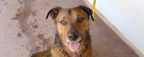 Tanka after a bath